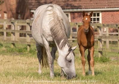 Foals 3