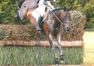 Horses Wellshead