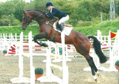 Horses Wiverna