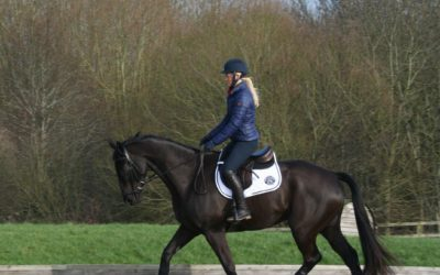 Horse and Hound training tip: How can I get my horse to go forwards?
