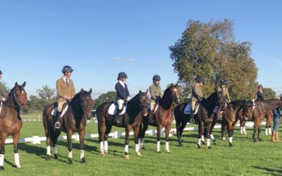 Osberton Young Horse Championships